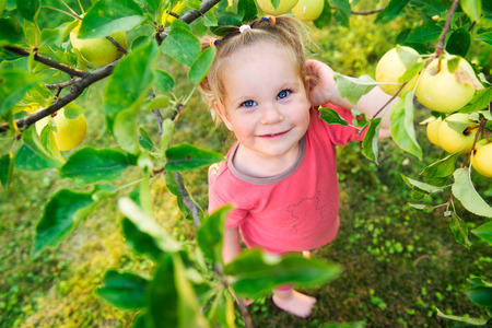 Cute blue-eyed little girl looking at fresh organic apples on a tree in a sunny garden
