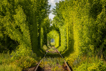 Famous Tunnel of Love in Ukraine. Railroad tunnel through the trees.
