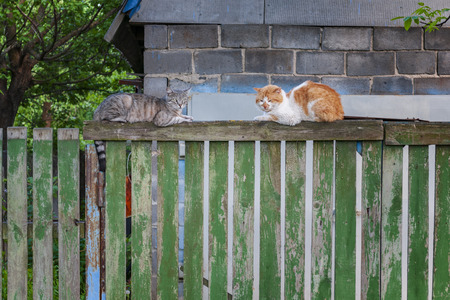 Two spring cats on wooden fence. Domestic animals in rural environment