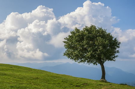 Lonely tree in the wind on the top of a mountain