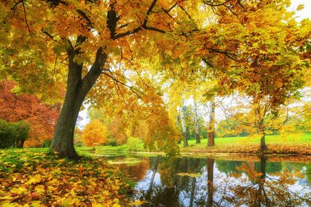 Beautiful autumn in the park. Trees with golden brown leaves and a pond