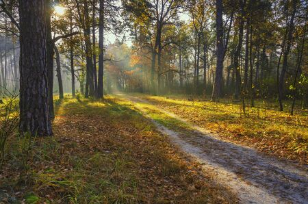 Scenic trail in the autumn forest illuminated by morning sun