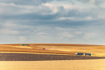 Wheat and corn crop harvesting. Colorful autumn countryside landscape