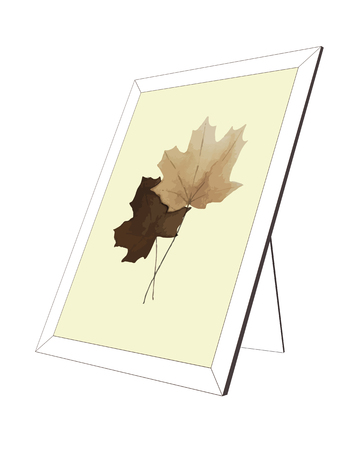 Picture of maple leaves in a frame on a white background. Foto de archivo - 125102836