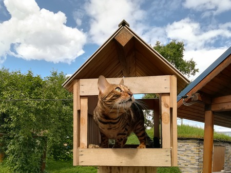 Cute bengal cat in a birdhouse against the sky