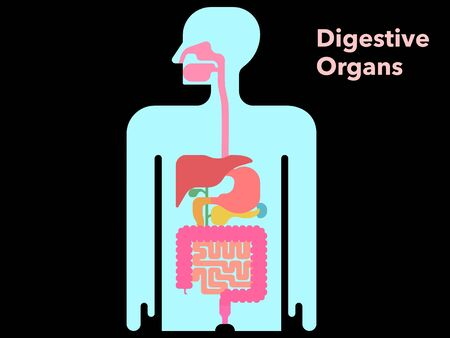 A simple illustration of a digestive system with a black background and margins