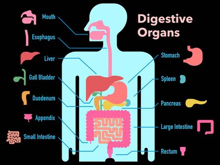 A simple illustration of a digestive system with its name on a black background 免版税图像 - 131512562
