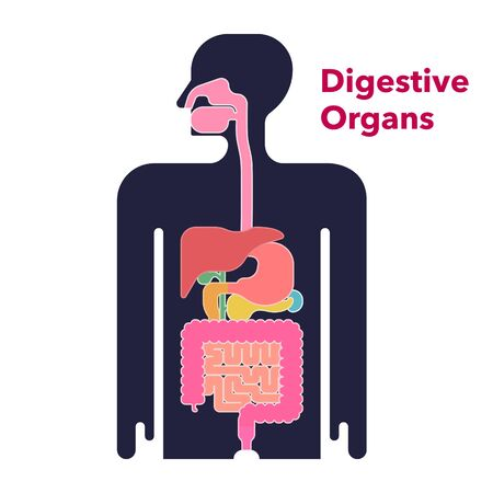 A simple illustration of the digestive system drawn on a black silhouette with margins