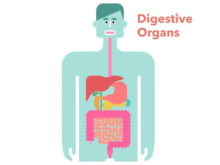 Cute and simple illustrations of digestive organs with margins