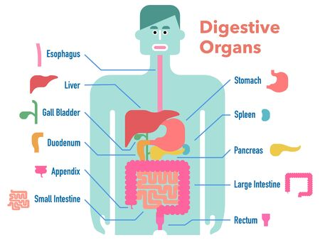 Cute and simple illustrations of the digestive system drawn on a black silhouette with cut-out and name of each part