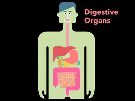 Cute and simple illustration of digestive system with margins on black background
