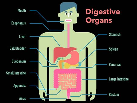 Cute and simple illustration of digestive system with the name of each part on a black background Stockfoto - 131512575