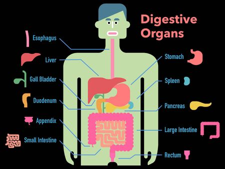 Cute and simple illustration of digestive organs with cut-outs and names of each part on a black background