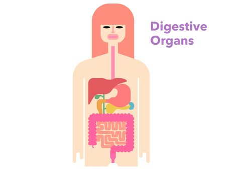 Colorful and simple illustrations of digestive organs with margins 矢量图像