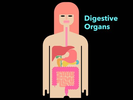 Colorful and simple illustrations of digestive organs with margins on a black background