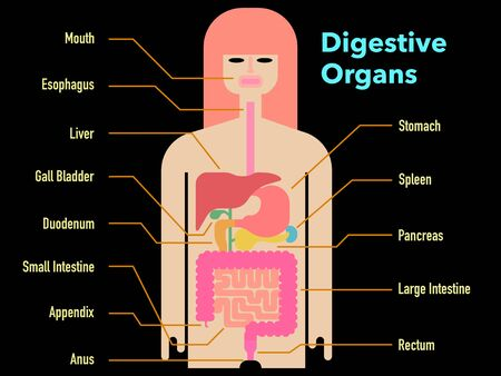 Colorful and simple illustration of digestive system with the name of each part on a black background