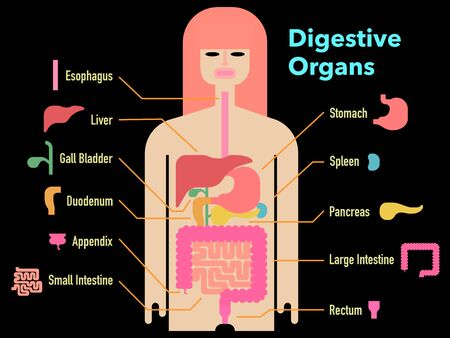 Colorful and simple illustration of digestive system with cut-outs and names of each part on a black background 免版税图像 - 131512581