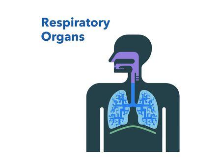 Simple illustration of respiratory organs 免版税图像 - 131512582