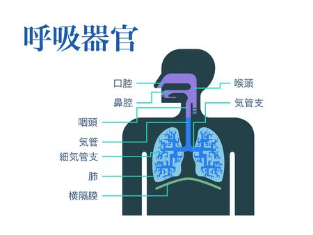 A simple illustration of a respiratory organ with the name of each part in Japanese 免版税图像 - 131512583