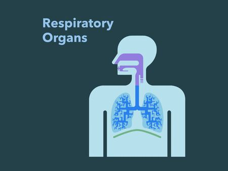 Simple illustration of respiratory organs