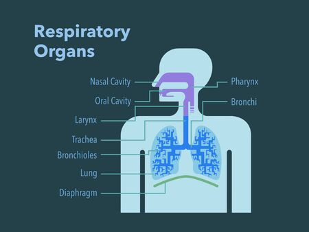 A simple illustration of a respiratory organ with the names of each part in English on a dark background Stockfoto - 132153840