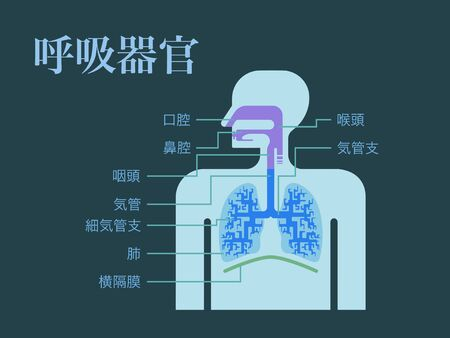 A simple illustration of a respiratory organ with the names of each part in Japanese on a dark background