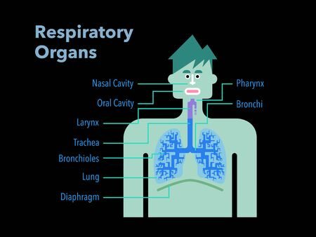 Simple illustration of a respiratory organ with the name of each part in English on a black back Stockfoto - 132134921