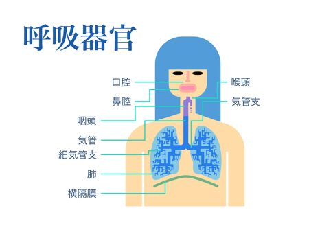 Simple illustration of a respiratory organ with the name of each part in Japanese on a white back Stock Illustratie