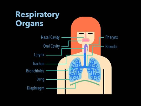 Simple illustration of a respiratory organ with the name of each part in English on a black back 免版税图像 - 132136916