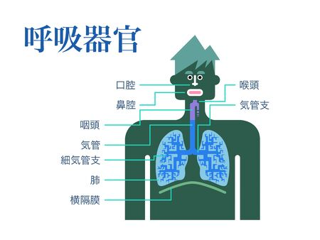 Simple illustration of a respiratory organ with the name of each part in Japanese on a white back Stockfoto - 132010068