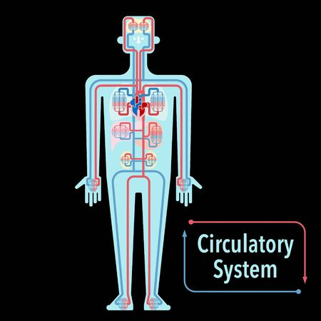 Simple illustration of the circulatory system of black back