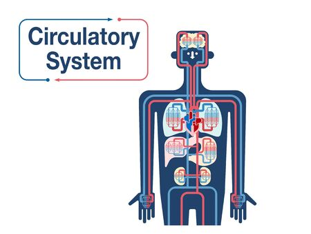 Simple illustration of the upper body cardiovascular system