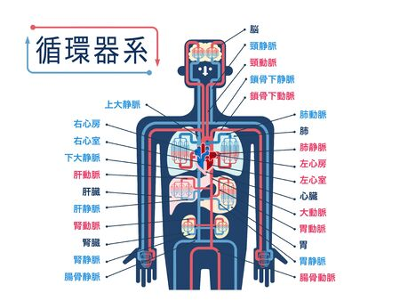Simple illustration of the upper body cardiovascular system with the name of each part in Japanese
