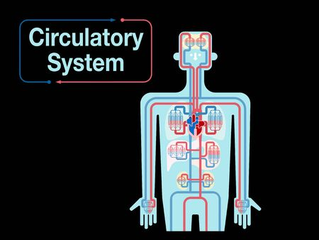 Illustration of a simple black back of the upper body cardiovascular system