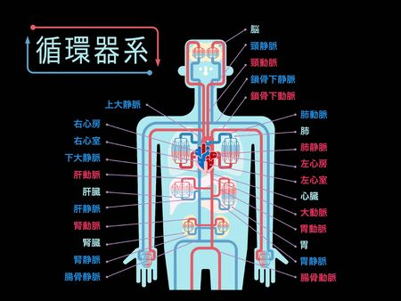 Simple illustration of the upper body cardiovascular system with the name of each part in Japanese on the black back