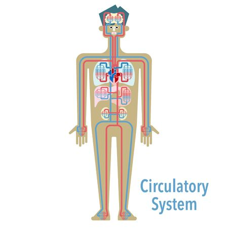 Simple illustrations of the circulatory system 免版税图像 - 132703592