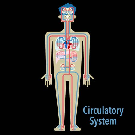 Simple illustration of the circulatory system of black back Stockfoto - 132705534