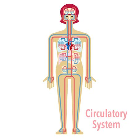 Simple illustrations of the circulatory system 免版税图像 - 132705284