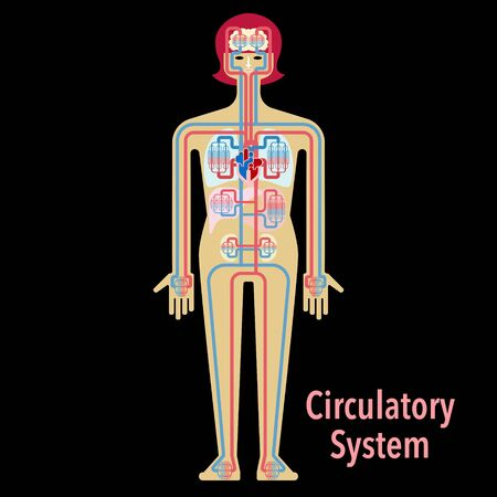 Simple illustration of the circulatory system of black back 免版税图像 - 132703128