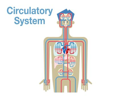 Simple illustrations of the circulatory system