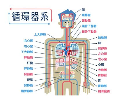 Simple illustration of the circulatory system with the names of each part in Japanese 免版税图像 - 132895995