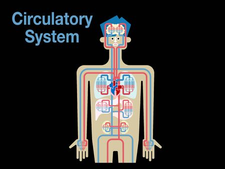 Simple illustration of the circulatory system of black back 免版税图像 - 132895752