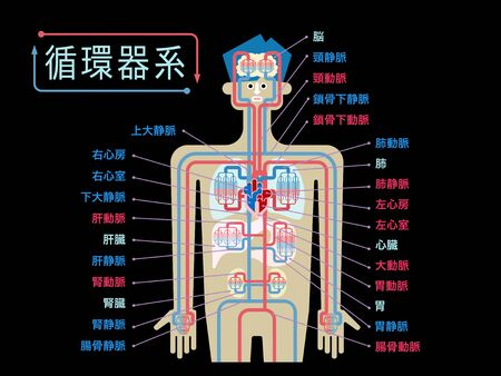Simple illustration of the circulatory system with the name of each part in Japanese on the black back 矢量图像