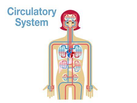 Simple illustrations of the circulatory system 免版税图像 - 133022292