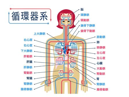Simple illustration of the circulatory system with the names of each part in Japanese Stock Illustratie