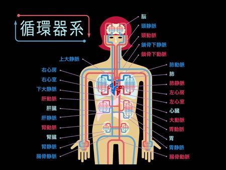 Simple illustration of the circulatory system with the name of each part in Japanese on the black back Stockfoto - 133117514