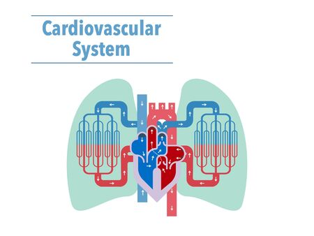 Simple illustrations of the cardiovascular system focusing on the heart and lungs 免版税图像 - 133116013