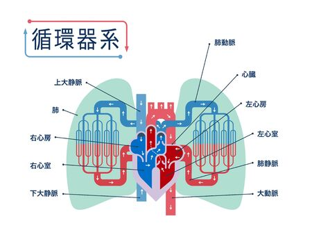 Simple illustrations of the cardiovascular system focusing on the heart and lungs with the names of each part in Japanese