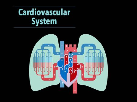Simple illustration of the circulatory system focusing on the heart and lungs of black back