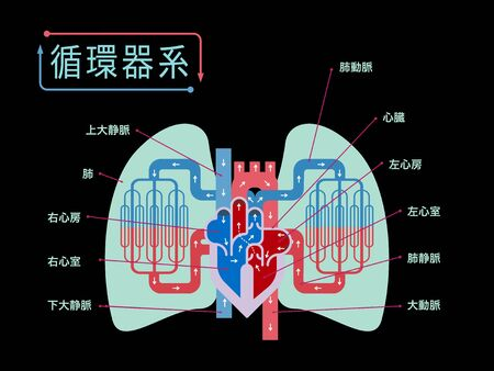 Simple illustration of the cardiovascular system focusing on the heart and lungs with the names of each part in Japanese on the black back 免版税图像 - 133115716